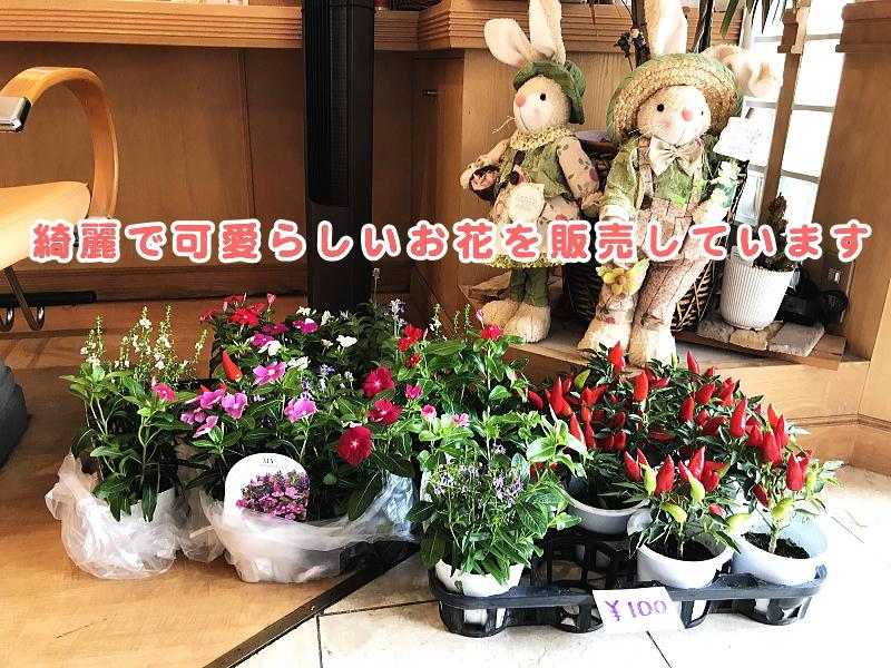 綺麗で可愛らしいお花を販売しています